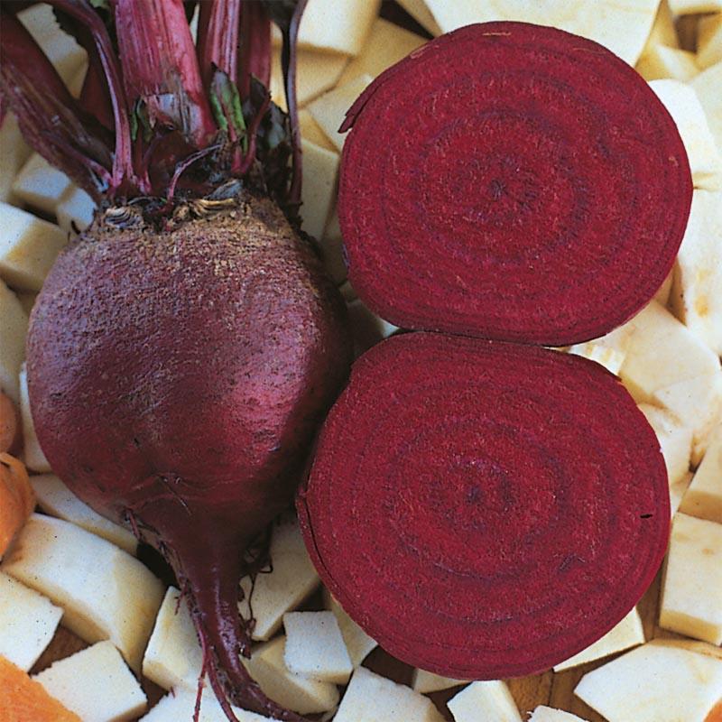 Rödbeta Detroit Globe, organic-Ekologiskt frö till Rödbeta Detroit Globe