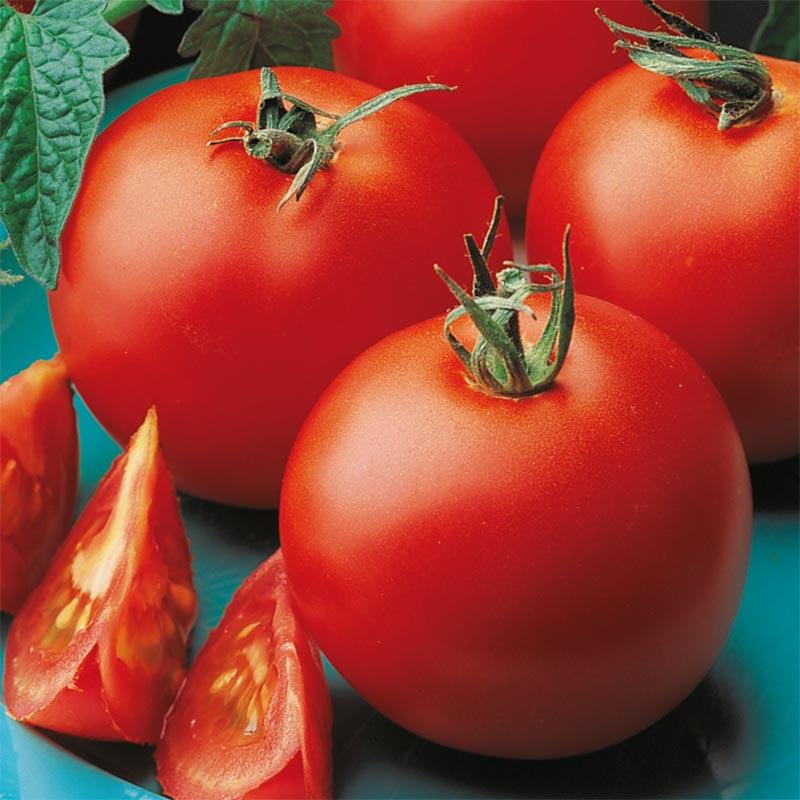 Tomat Matina, organic, Ekologiskt frö till Tomat Matina
