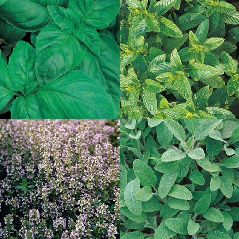 Fem olika kulinariska favoriter , Frö till Fem olika kulinariska favoriter  från Suffolk Herbs