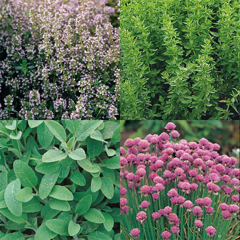 Kryddträdgården - fem olika örter-Frö till Kryddträdgården - fem olika örter från Suffolk Herbs