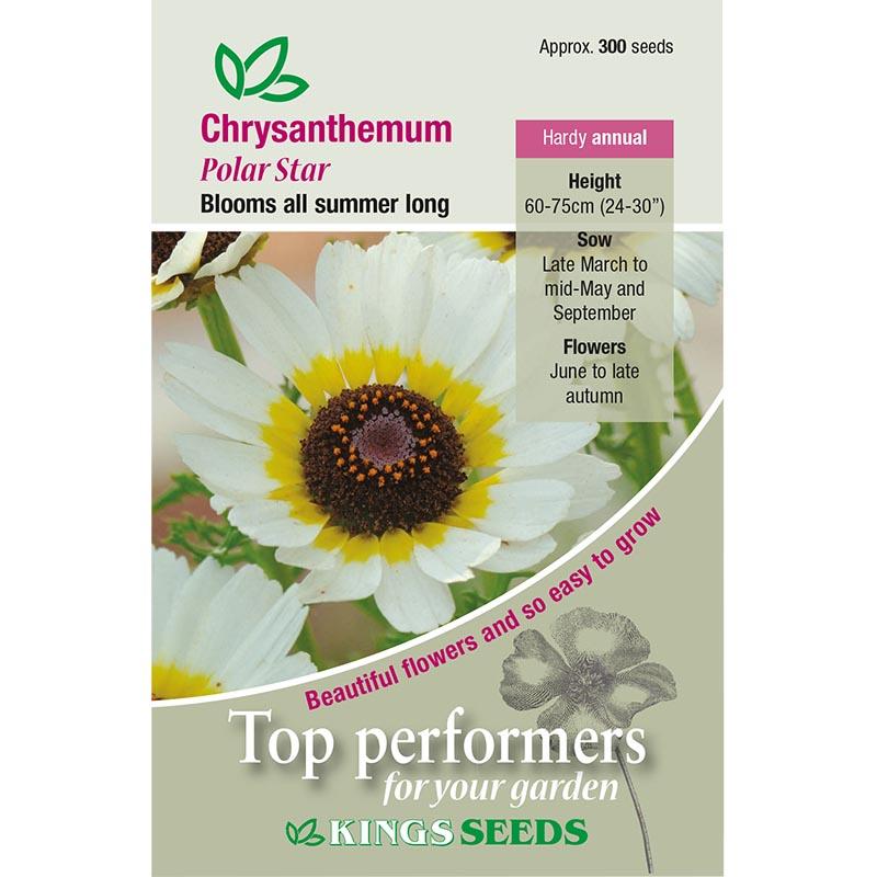 Fröpåse till Chrysanthemum, Polar Star