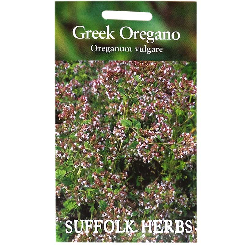 Kungsmynta, grekisk oregano, Frö till Kungsmynta, grekisk oregano från Suffolk Herbs