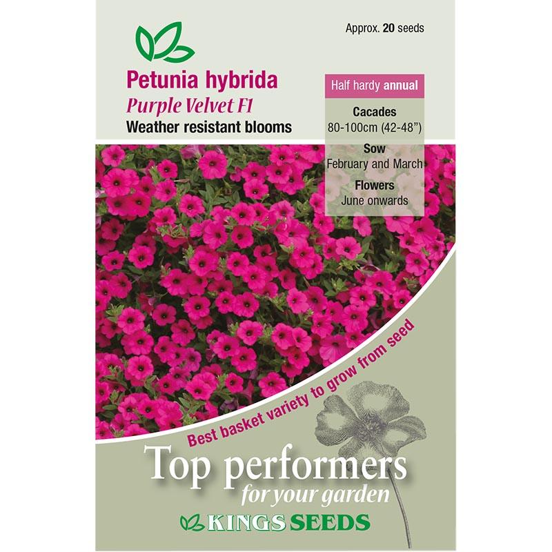 Petunia, Purple Velvet F1, Fröpåse till Petunia, Purple Velvet F1
