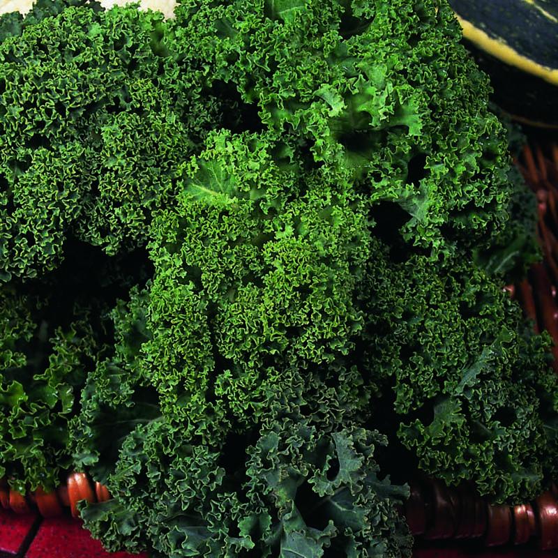 Grönkål, Dwarf Green Curled-Fröer till Grönkål, Dwarf Green Curled