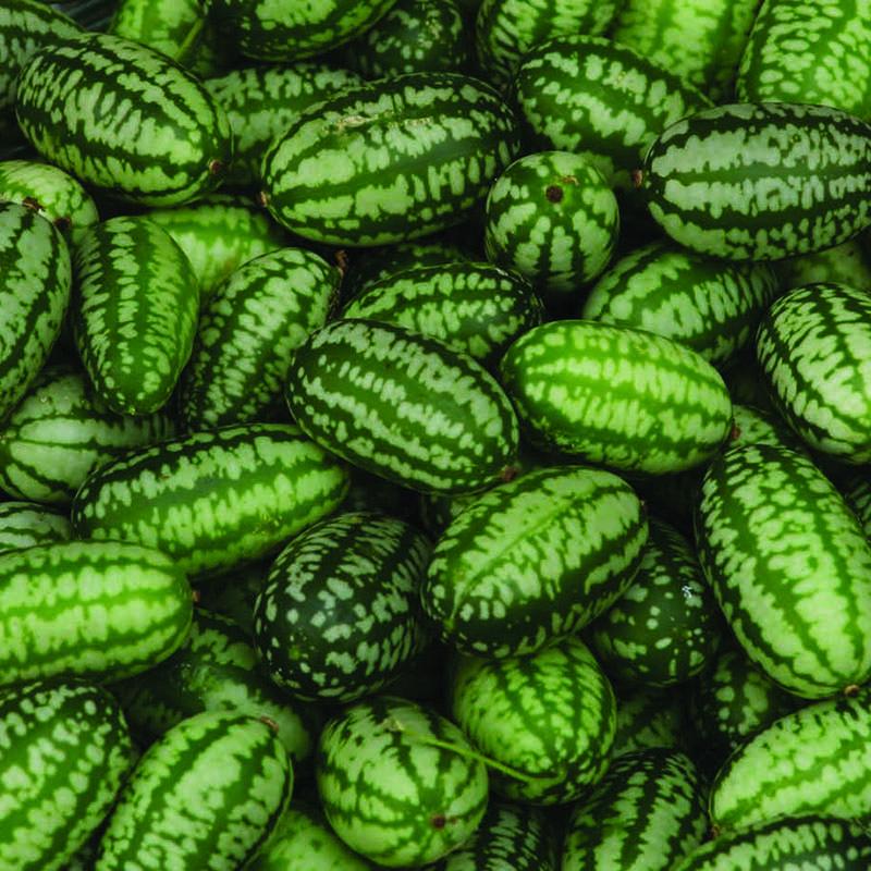 Gurka, Cucamelon Mexican Gherkin-Fröer till Gurka, Cucamelon Mexican Gherkin