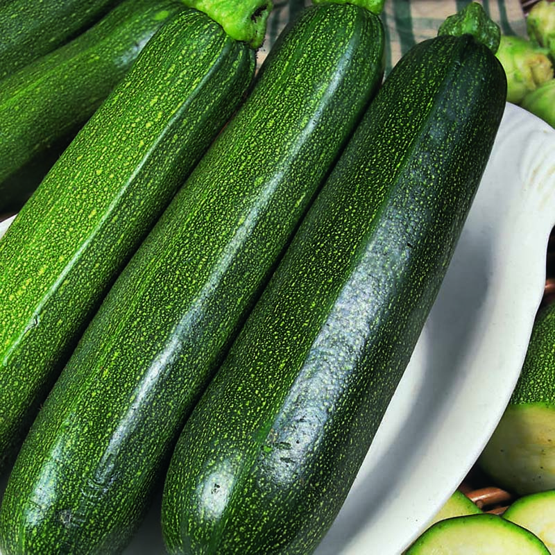 Zucchini, All Green Bush-Fröer till Zucchini, All Green Bush