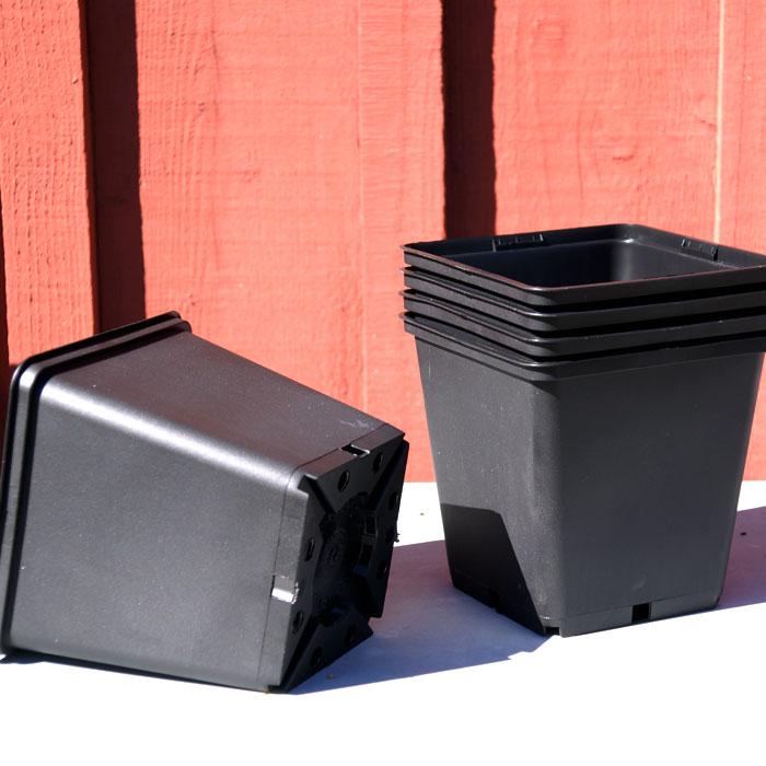 Perennkruka, 13 x 13 cm-Perennkruka i plast 13 x 13 cm