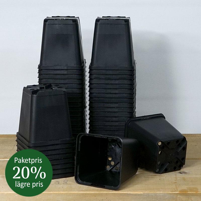 Perennkruka i plast 9 x 9 cm, 50 st. Paketpris -20%