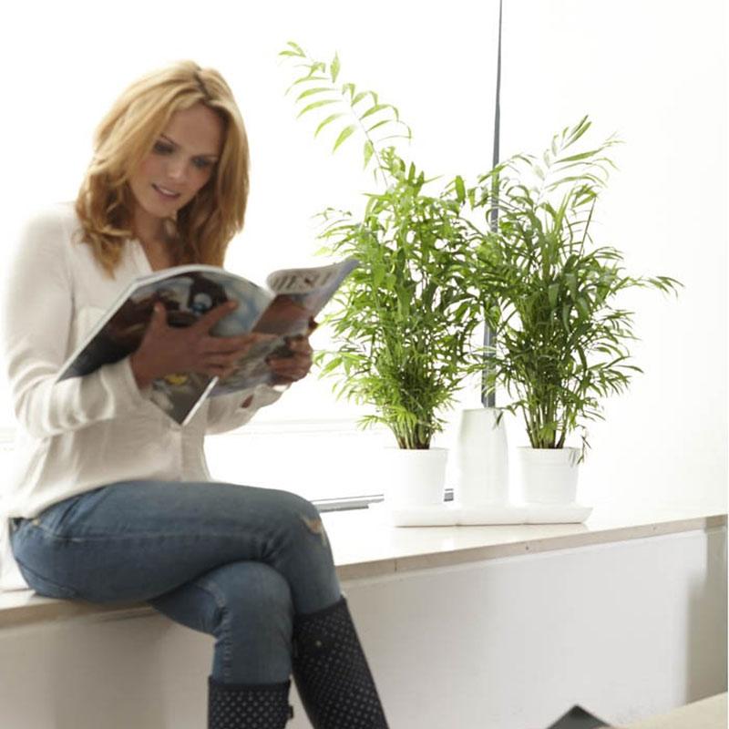 Minigarden Basic M Pots vit med krukväxter