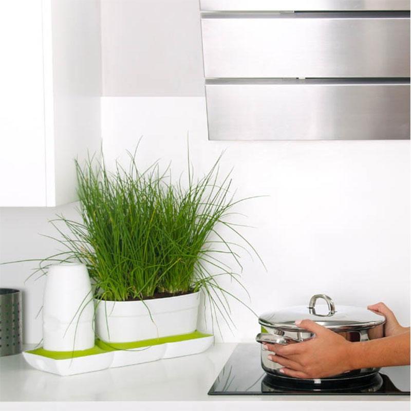Minigarden  basic i köket med kryddodling