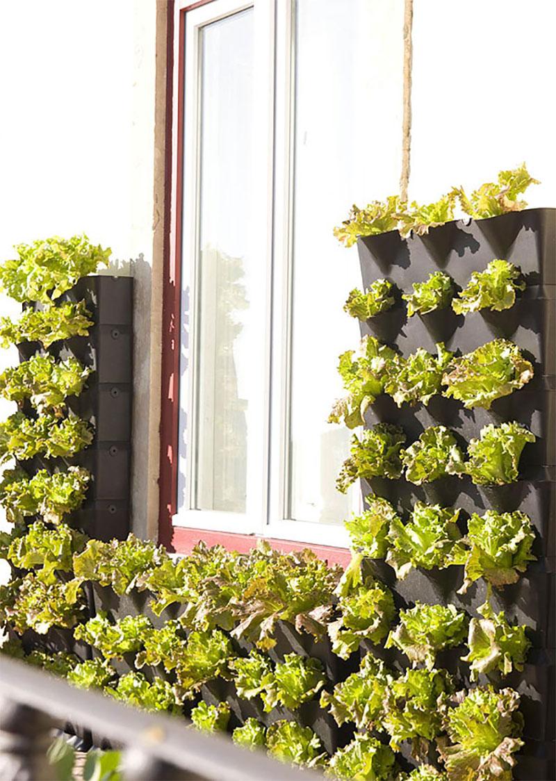 Minigarden klär in ett fönster