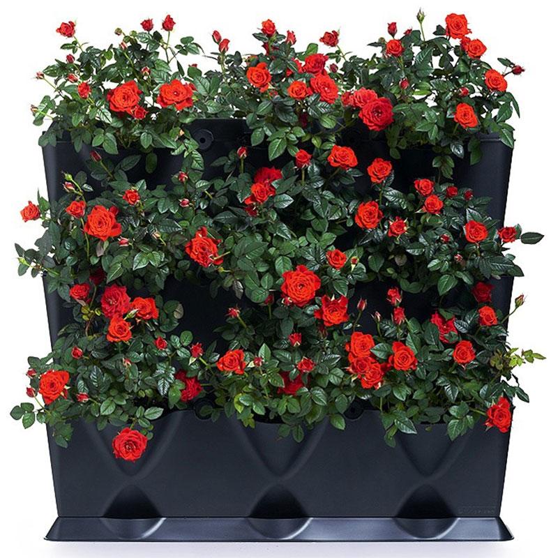 Växtvägg med rosor