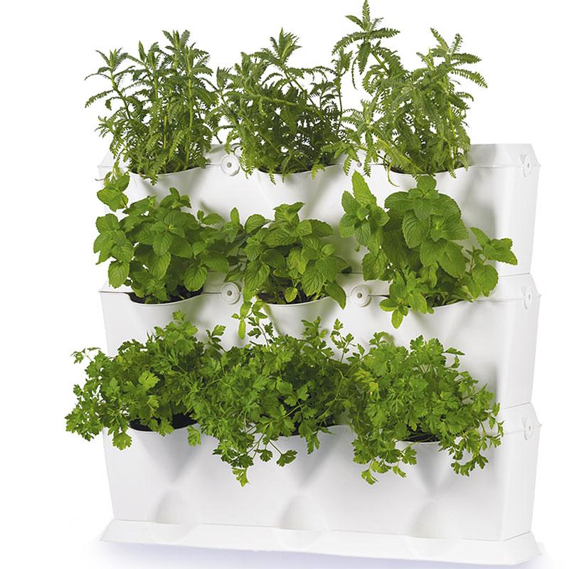 Växtvägg med kryddväxter
