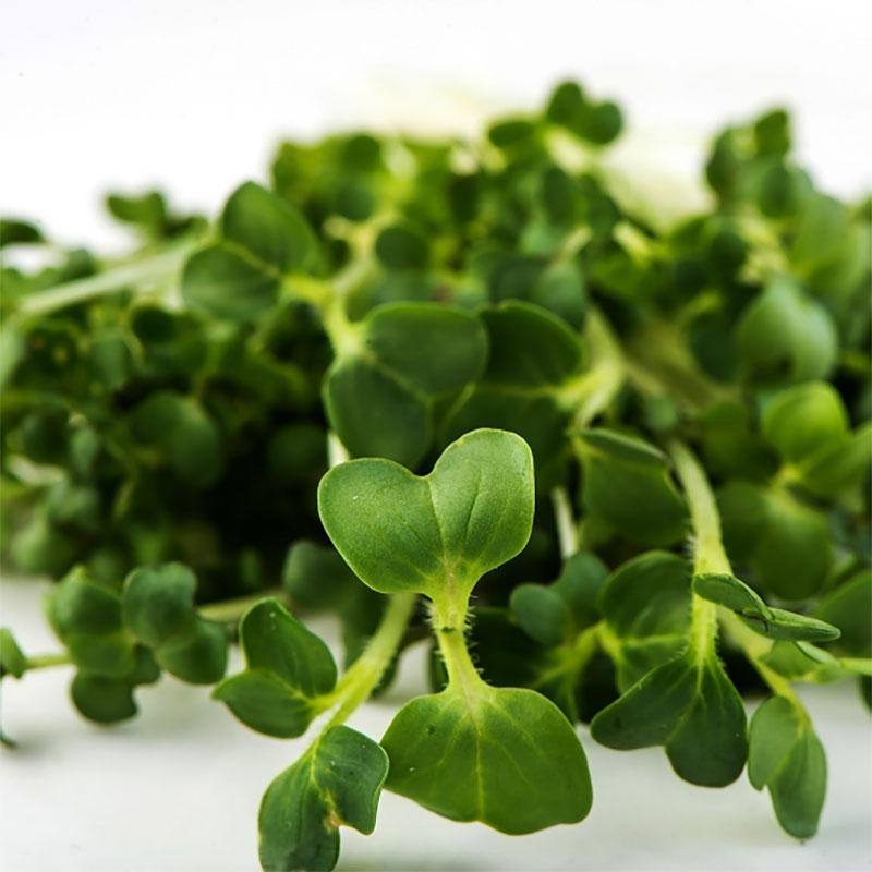 Groddfröblandning Brassica Blend-Ekologiskt frö till groddning och skott Brassica Blend