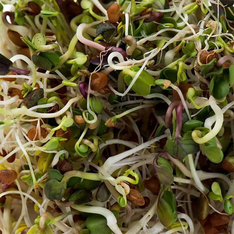 Groddfrö Linsmix crunchy-Ekologiskt frö till groddning och skott linsmix crunchy