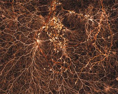 rootgrow, 360 gram,