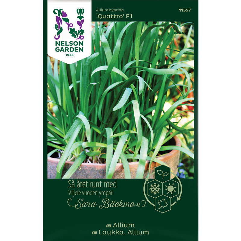 Allium, Allium hybrida 'Quattro' F1 - Sara Bäckmo