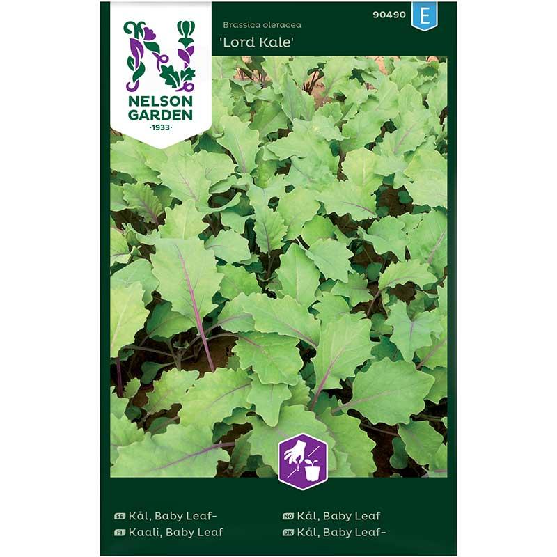 Frö till Baby Leaf kål 'Lord Kale'