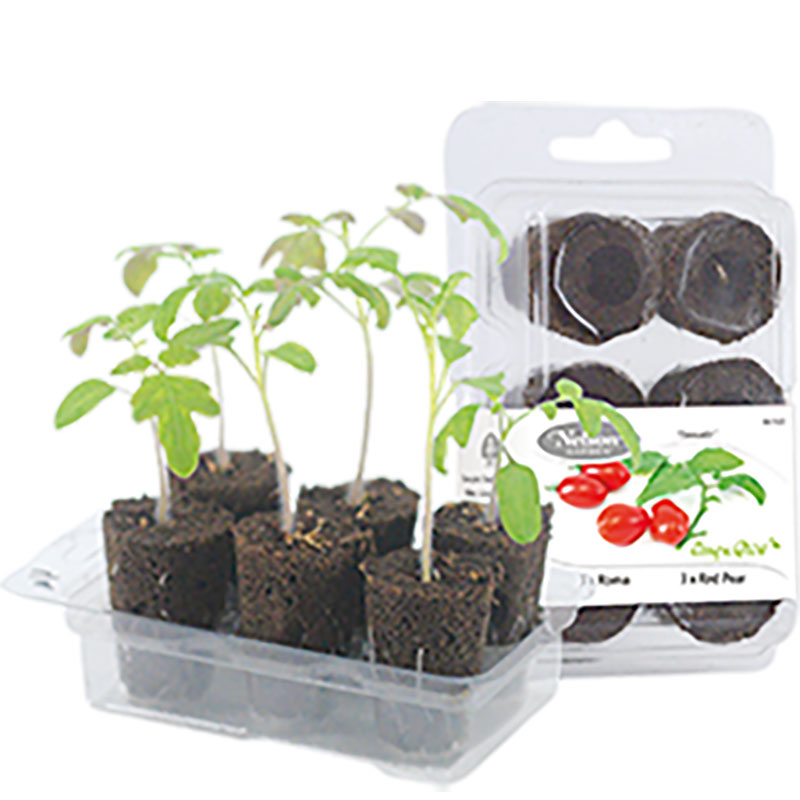 Odlingsset, Easy To Grow, Tomato-Förodlingskit, Easy to Grow, tomater