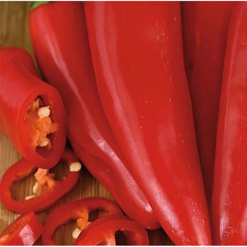 Chili Pimient d'Espelette-Frö till chilipeppar Pimient d'espelette