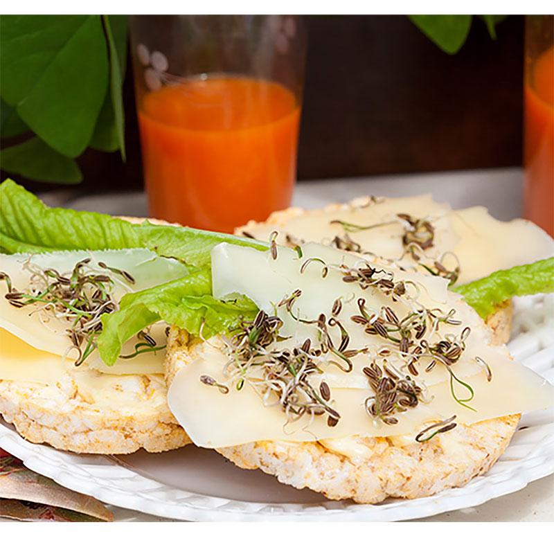 Groddar, fänkål - ekologiskt frö-Ekologiskt frö till groddar - fänkål