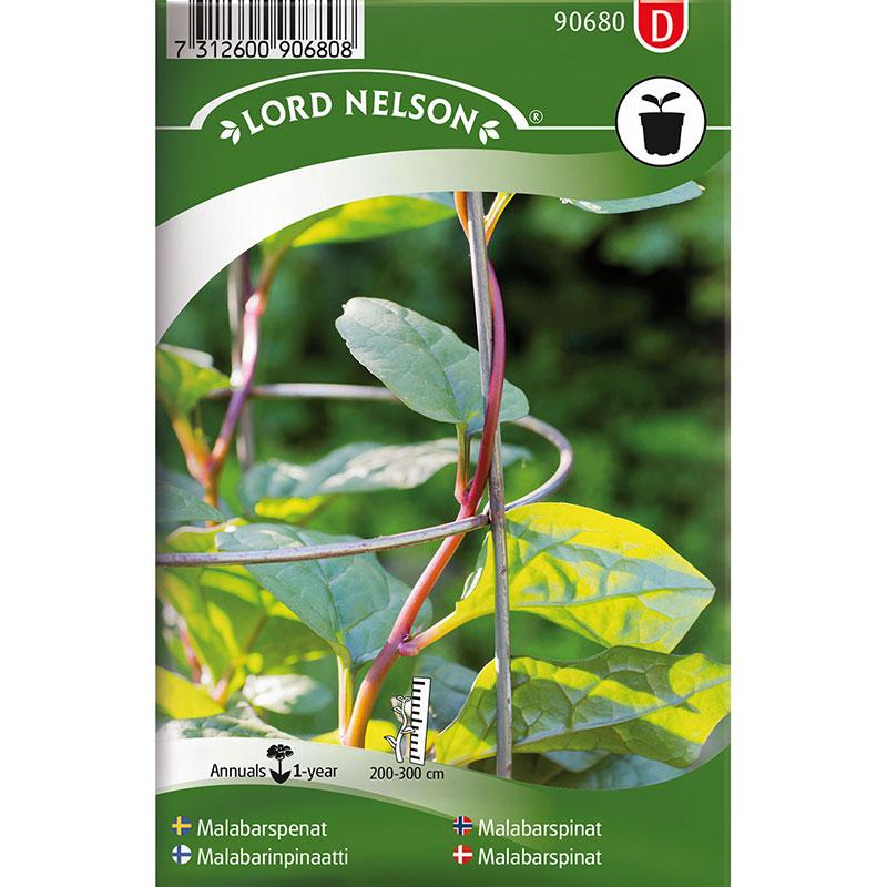 Frö till Malabarspenat, Basella rubra  L., röd