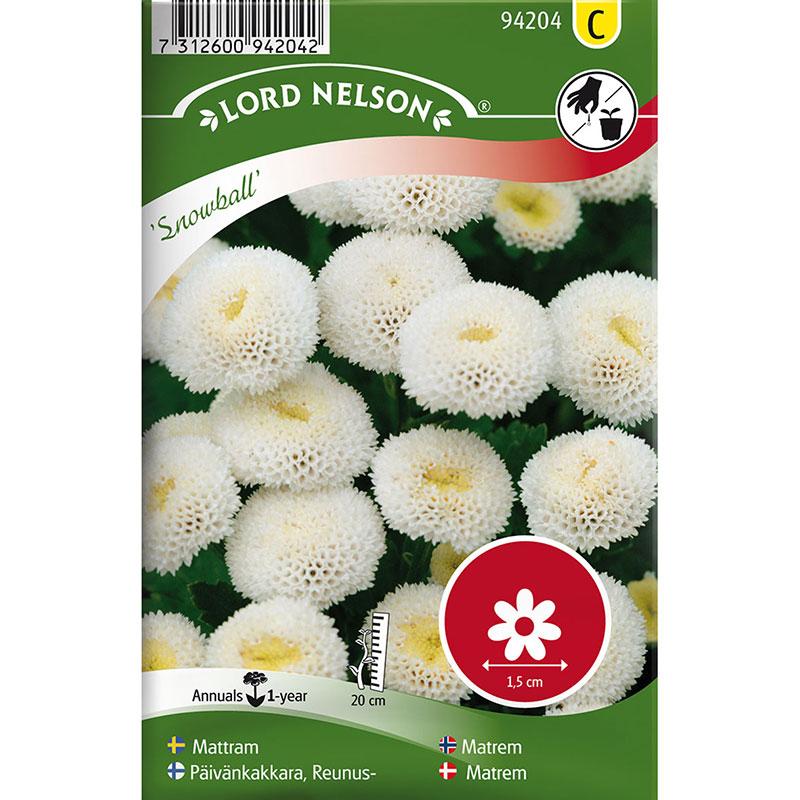 Frö till Mattram, Tanacetum parthenium 'Snowball'