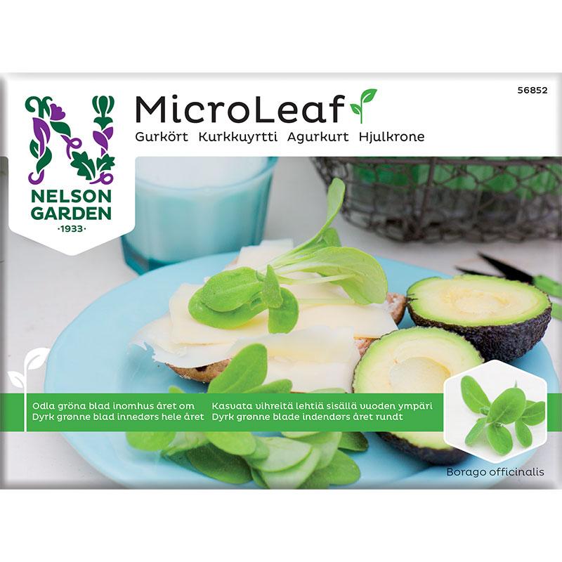 frö till micro leaf gurkört