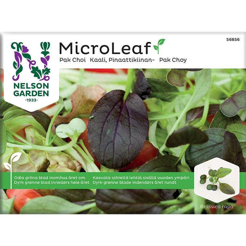 Micro leaf, Pak Choi 'Red Wizard', frö till micro leaf pak choi