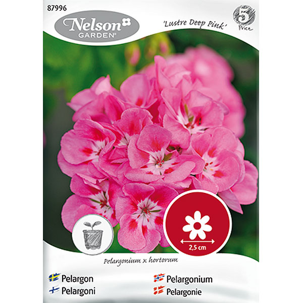 Pelargon Lustre, Deep pink,