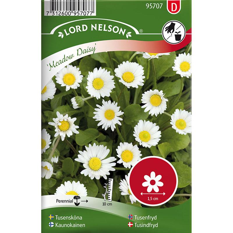 Frö till Tusensköna, Bellis perennis L. 'Meadow Daisy'