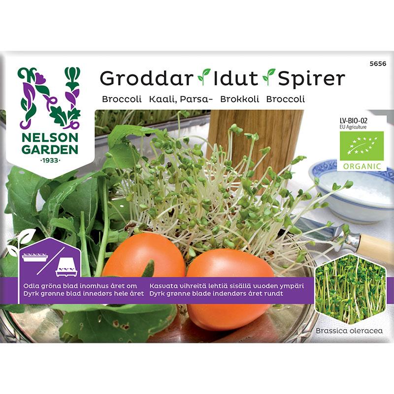 Organiskt frö till groddar - Broccoli