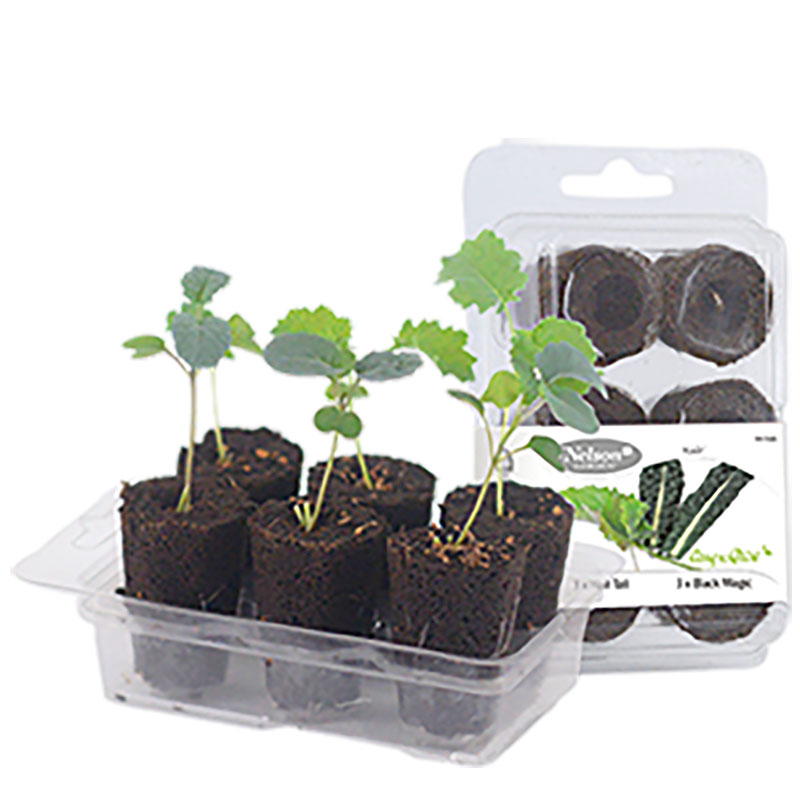 Odlingsset, Easy To Grow, Kale, Förodlingsset Easy to Grow, kale