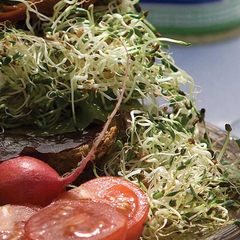 Groddar Alfalfa - Primo Vitamino-Organiskt frö till groddar - Alfalfa