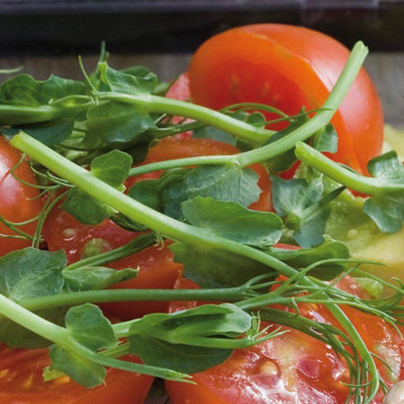 Groddar Ärtskott - Primo Vitamino-Organiskt frö till groddar - Ärtskott