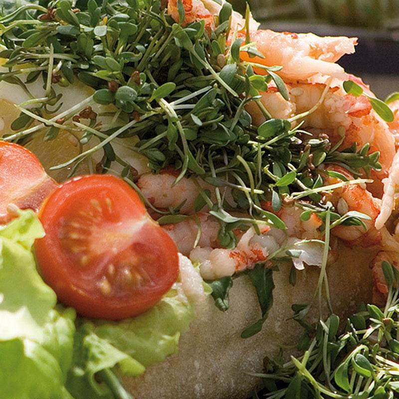 Groddar Krasse - Primo Vitamino-Organiskt frö till groddar - Smörgåskrasse