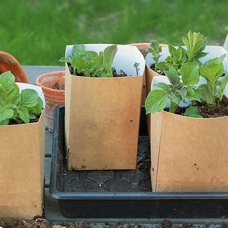 Paper Pot Potato förodlingsset,