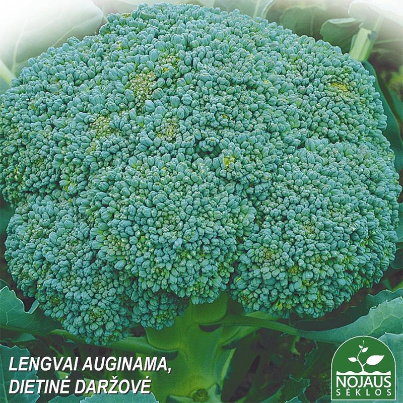 Broccoli Groene Calabrese, ekologiskt odlat-Ekologiskt odlat frö till broccoli - Brassica oleracea