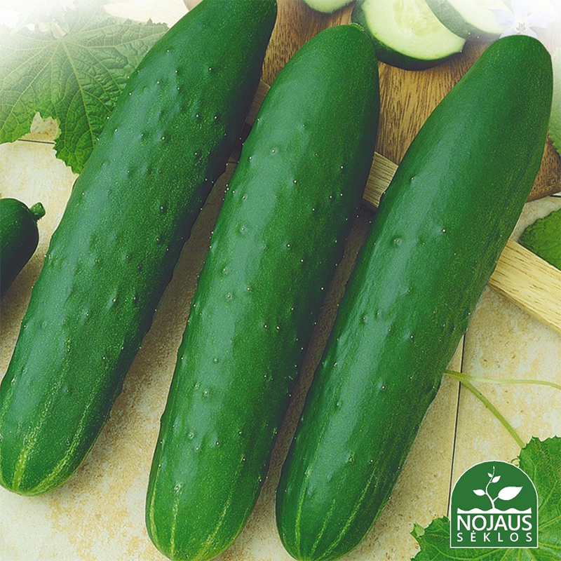 Gurka Marketmore, ekologiskt odlat-Ekologiskt odlat frö till Cucumis Gurka Marketmore