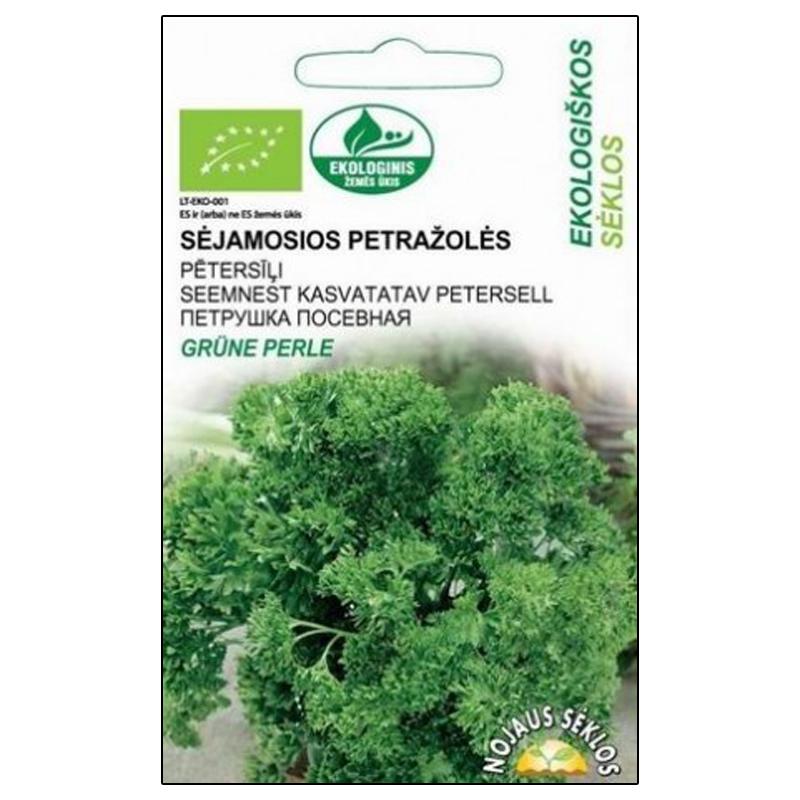 Persilja Grune Perle, ekologiskt frö, Frö till Petroselinum crispum (Mill.) organiskt odlat
