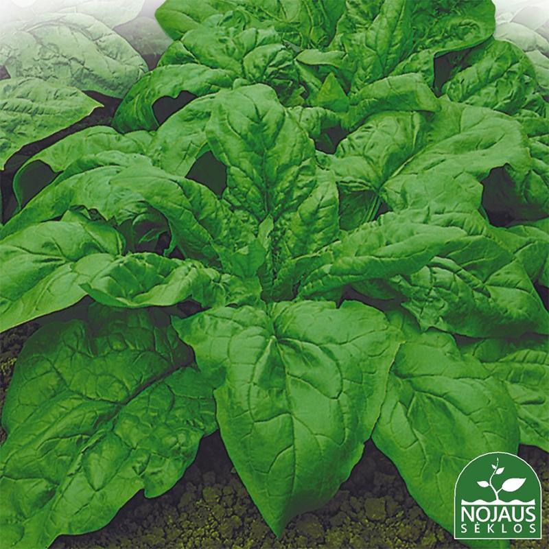 Spenat Organic Palco, ekologiskt frö-Ekologiskt frö till spenat - Spinacia oleracea L.