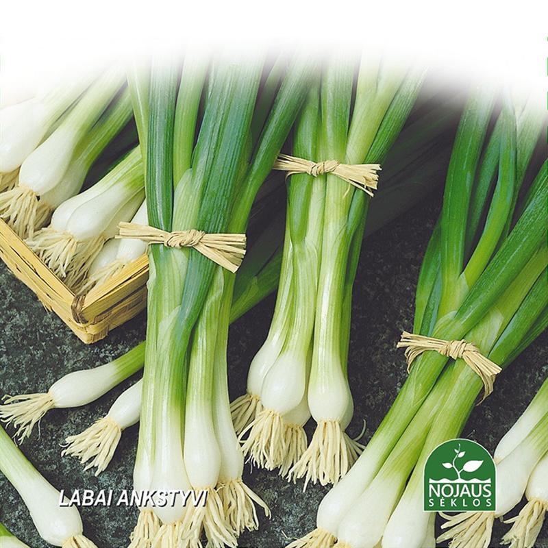 Vårlök Organic BioSeed White Lisbon, Ekologiskt frö till vårlök - Allium cepa L
