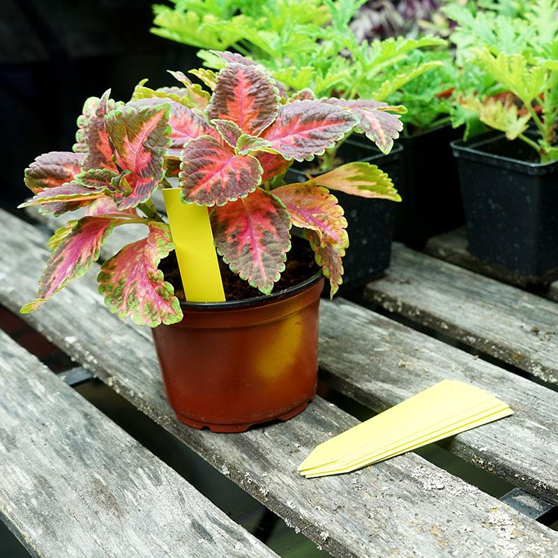 Plantetiketter för växtnamn