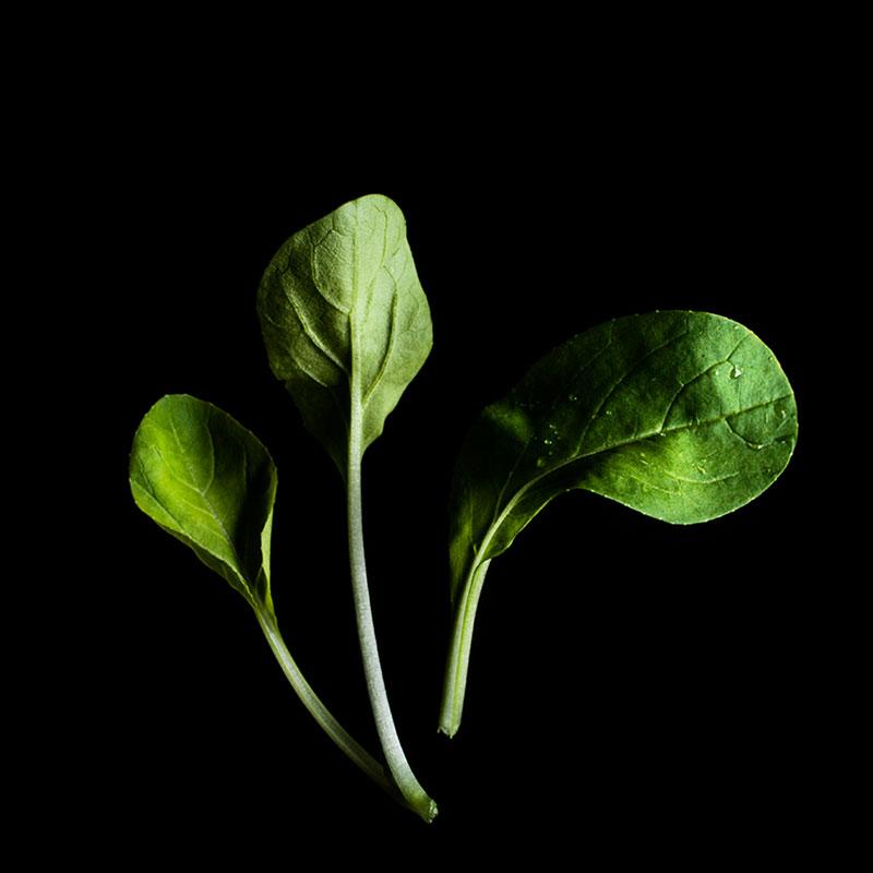 Frökapsel Plantui Smart Garden - Pak Choi-Frökapsel till Smart Garden inomhusodling - Brassica rapa var. chinensis