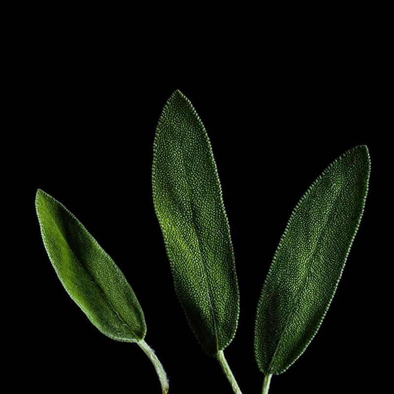 Frökapsel Plantui Smart Garden - Salvia-Frökapsel till Smart Garden inomhusodling - Salvia officinalis