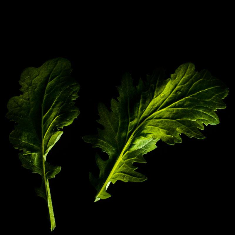 Frökapsel Plantui Smart Garden - Komatsuna, Frökapsel till Smart Garden inomhusodling - Brassica rapa var. perviridis