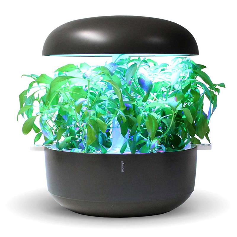 Frökapsel till Smart Garden inomhusodling - Ocimum basilicum - Citron