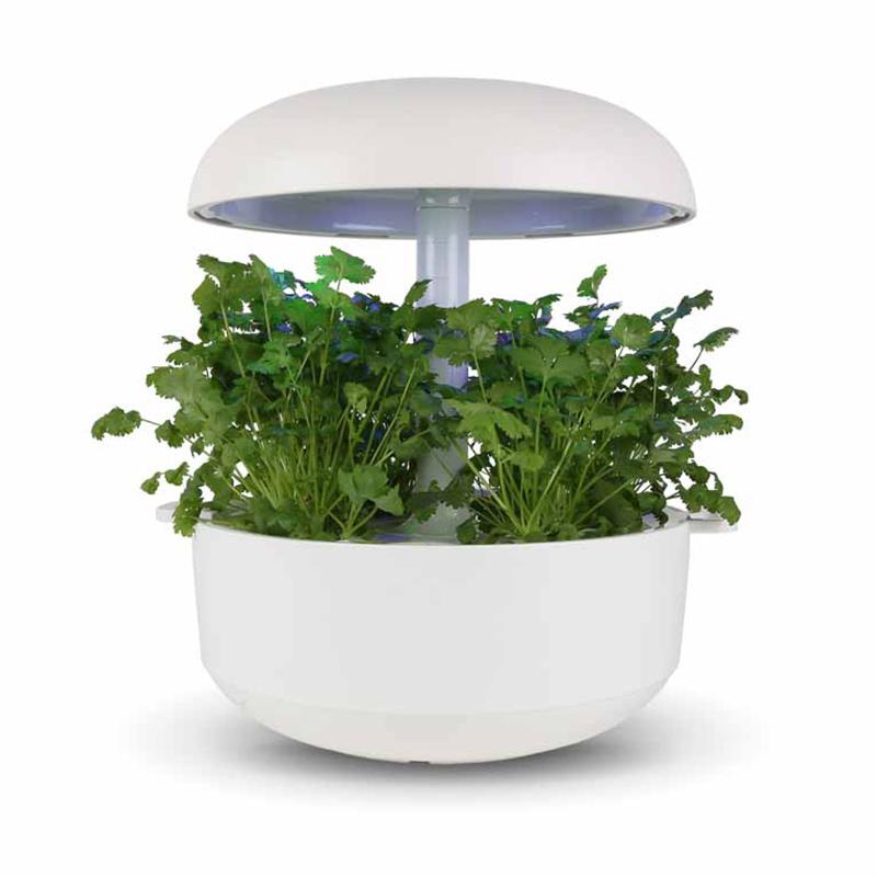 Frökapsel till Smart Garden inomhusodling - Coriandrum  sativum