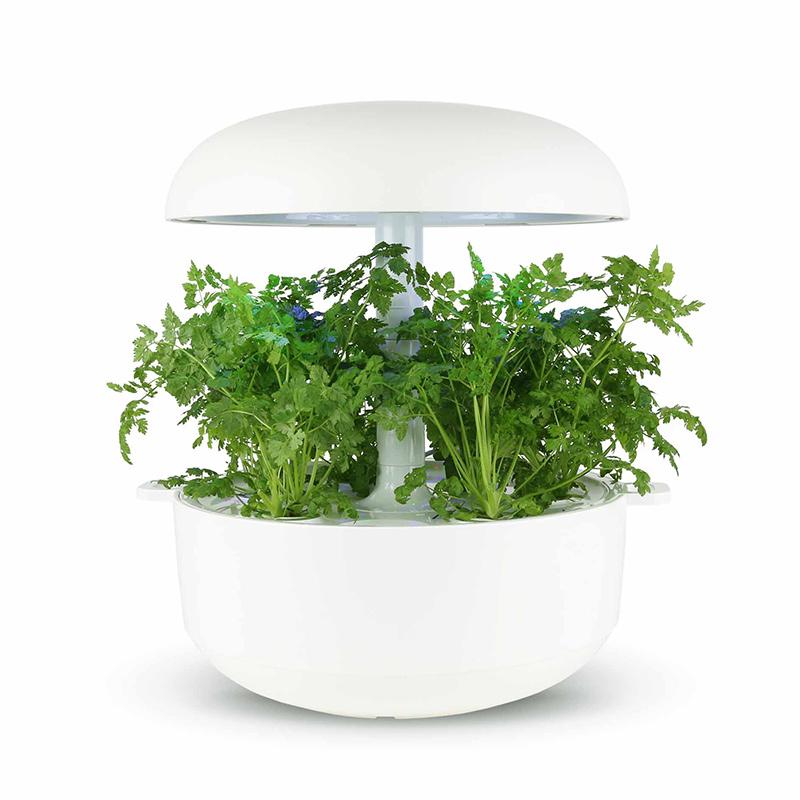 Frökapsel till Smart Garden inomhusodling - Anthriscus cerefolium
