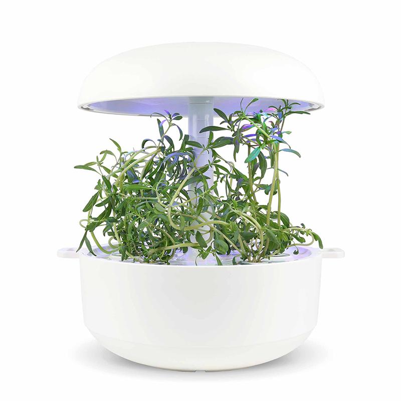 Frökapsel Plantui Smart Garden - Kyndel, Frökapsel till Smart Garden inomhusodling - Satureja hortensis